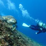宮古島ダイビング通信:ガッツリ下地島でダイビング