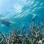 サンアイランド通信:サンゴの森