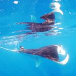 宮古島ダイビング通信:2014年2・3月、海のおすすめ