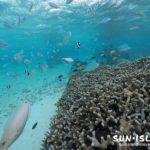 サンゴが群生するシギラビーチ