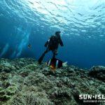 のんびり下地島ダイビング