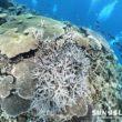 サンゴがキレイな八重干潮