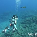 水中でカメに遭遇