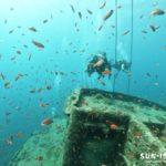 沈船に群れるキンギョハナダイ